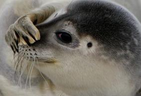 dieren-zeehond