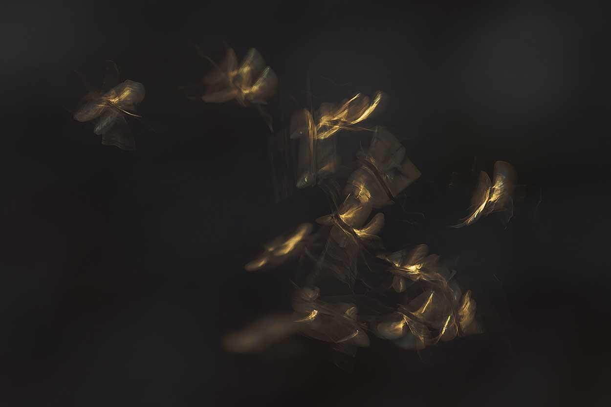 Dansmuggen